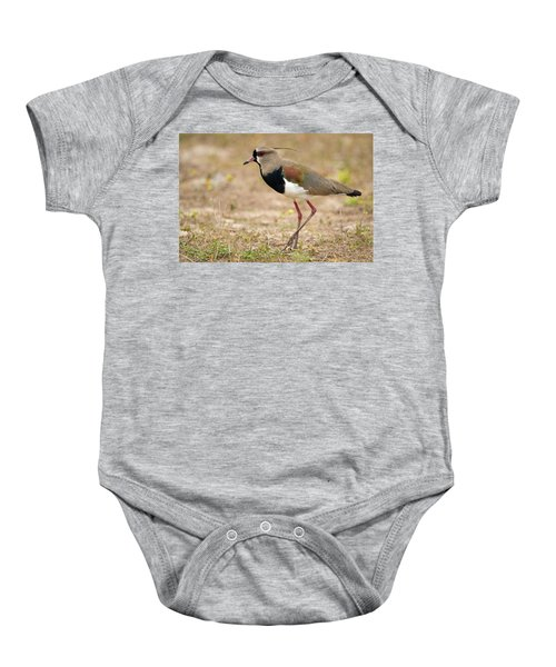 Close-up Of A Southern Lapwing Vanellus Baby Onesie by Panoramic Images