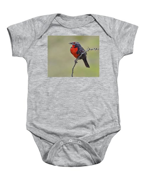 Long-tailed Meadowlark Baby Onesie by Tony Beck