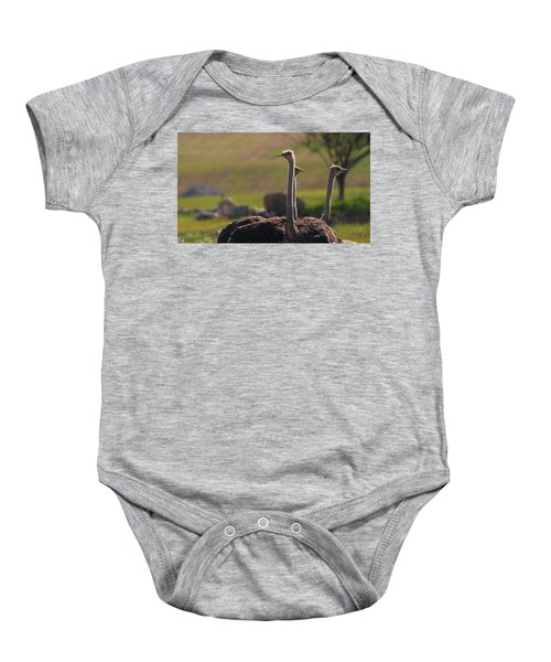 Ostriches Baby Onesie by Dan Sproul