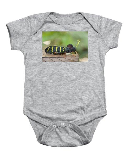Lubber Grasshopper Guyana Baby Onesie by Piotr Naskrecki