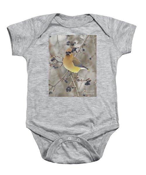 Cedar Wax Wing Baby Onesie by Robert Pearson