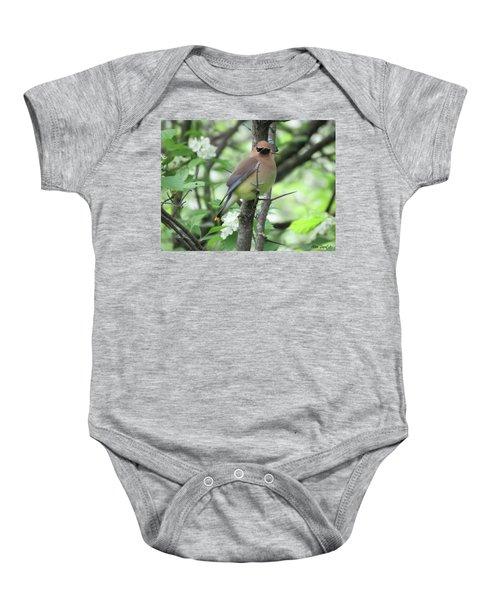 Cedar Wax Wing Baby Onesie by Alison Gimpel