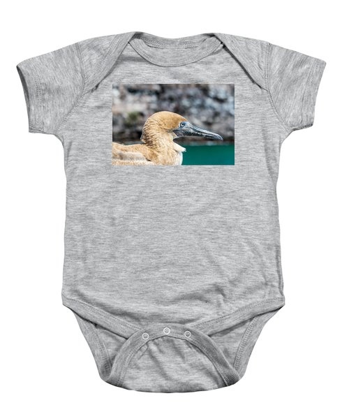 Red Footed Booby Juvenile Baby Onesie by Jess Kraft