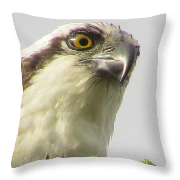 Eye Of The Osprey Throw Pillow by Zina Stromberg