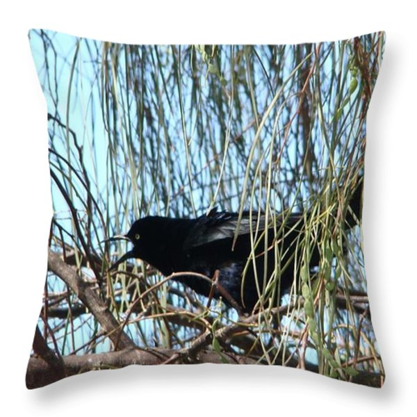 Great-tailed Grackle Throw Pillow by Beverly Guilliams