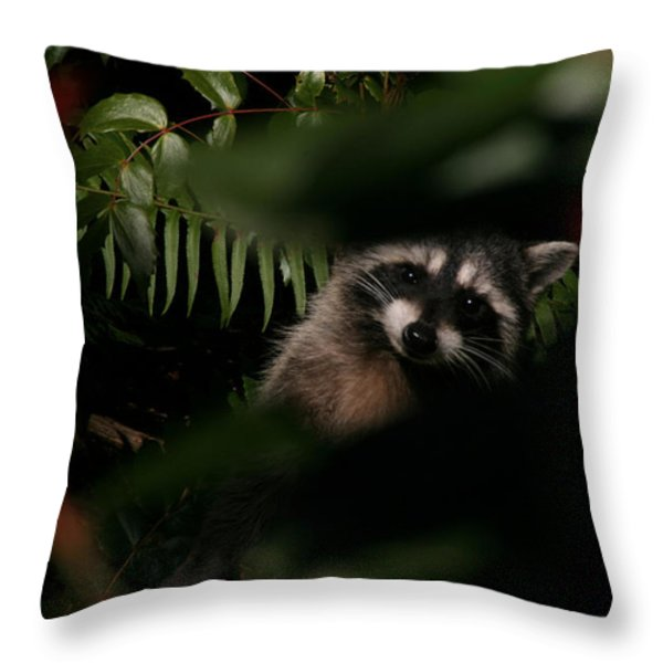I Can See You  Mr. Raccoon Throw Pillow by Kym Backland
