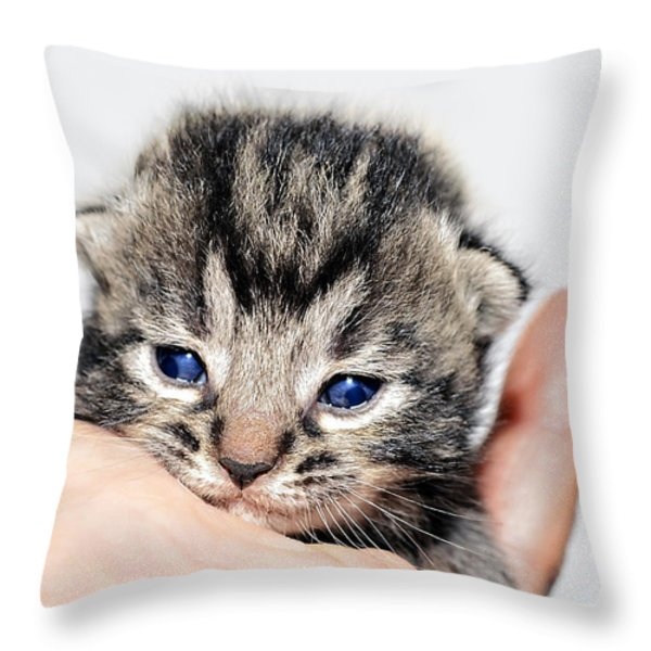 Kitten in a Hand Throw Pillow by Susan Leggett