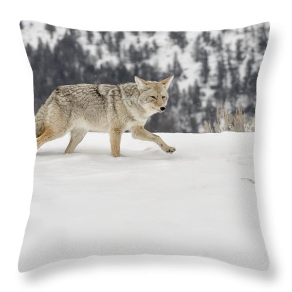 Winter's Determination Throw Pillow by Sandra Bronstein