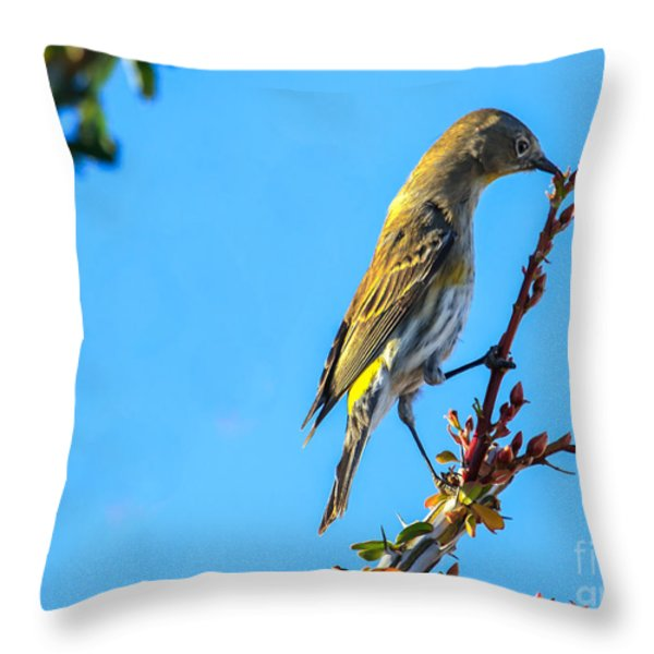 Yellow-rumped Warbler Throw Pillow by Robert Bales