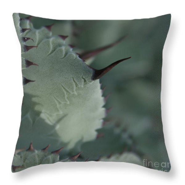 Agave Parryi Truncata - Artichoke Agave - Cactus And Succulents  Maui Hawaii Throw Pillow by Sharon Mau