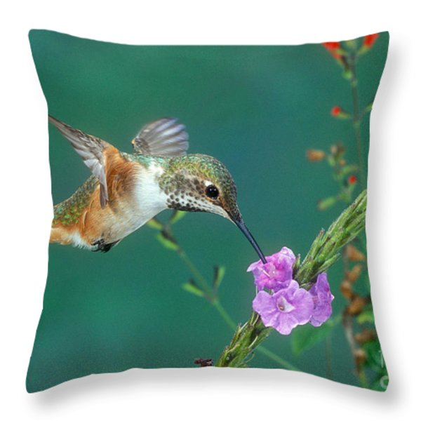 Allens Hummingbird Throw Pillow by Anthony Mercieca