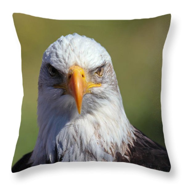 Bald Eagle Throw Pillow by Jim Nelson