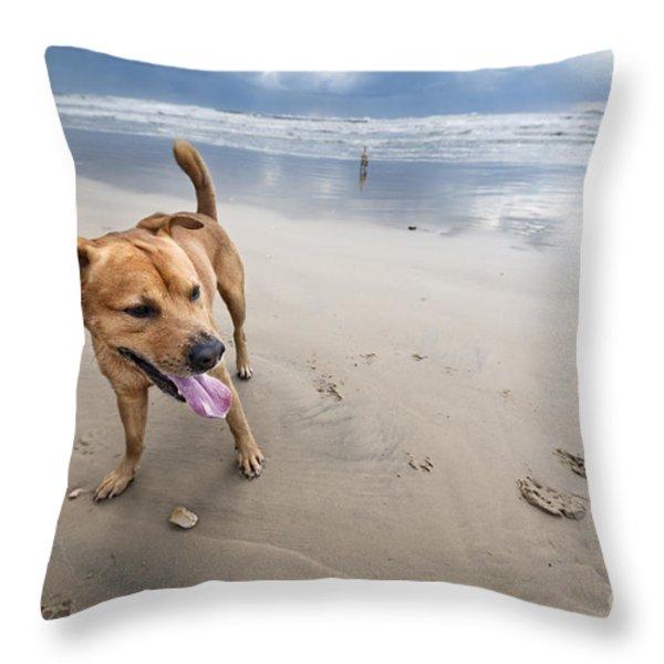 Beach Dog Throw Pillow by Eldad Carin