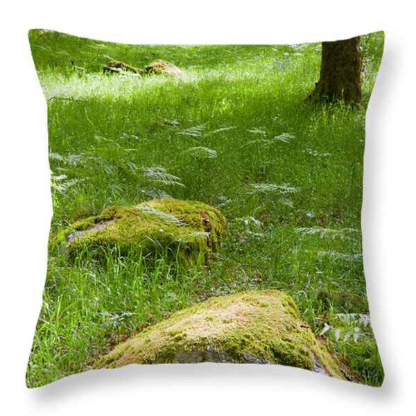 Beautiful lush vobrant image of ancient woodland Throw Pillow by Matthew Gibson