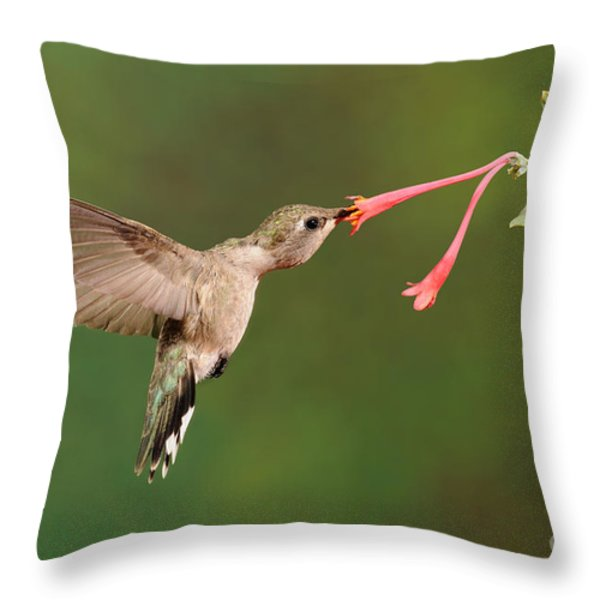 Black-chinned Hummingbird Throw Pillow by Scott Linstead