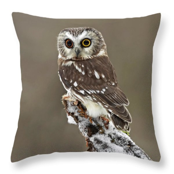 Captivation Throw Pillow by Inspired Nature Photography By Shelley Myke
