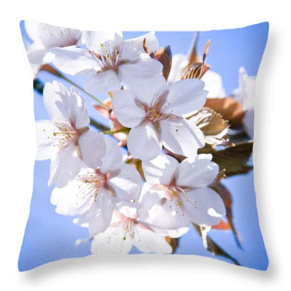 Cherry tree Blossoms Close up Throw Pillow by Raimond Klavins
