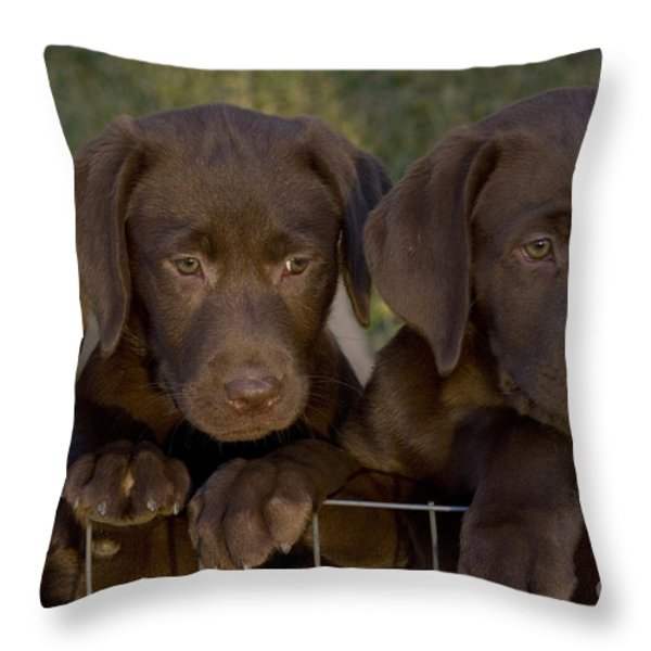 Chocolate Labrador Retriever Pups Throw Pillow by Linda Freshwaters Arndt