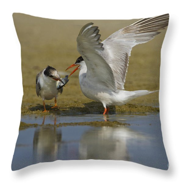 Common Tern Sterna Hirundo Throw Pillow by Eyal Bartov