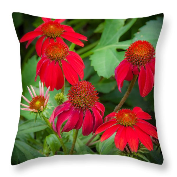 Coneflowers Echinacea Red  Throw Pillow by Rich Franco