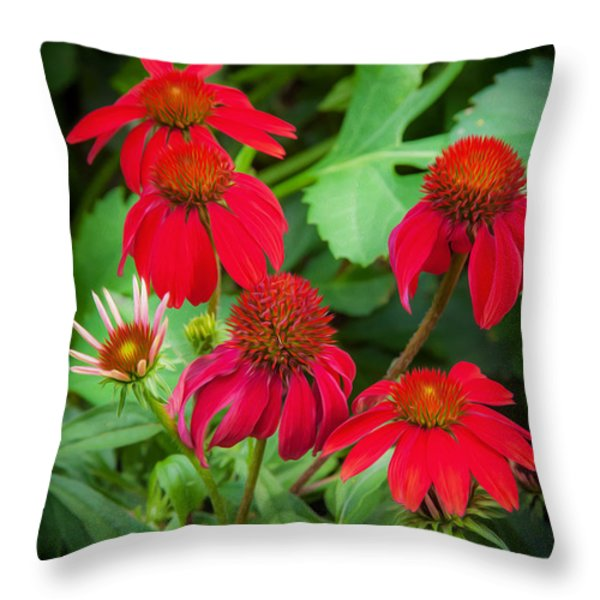 Coneflowers Echinacea Rudbeckia Throw Pillow by Rich Franco