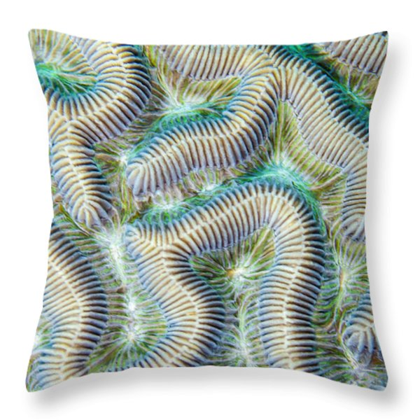 Coral Maze Throw Pillow by Jean Noren