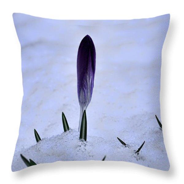 Crocus In Snow Throw Pillow by Leif Sohlman