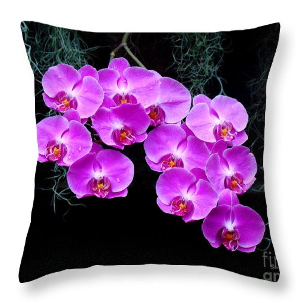 Dew-kissed Orchids Throw Pillow by Sue Melvin