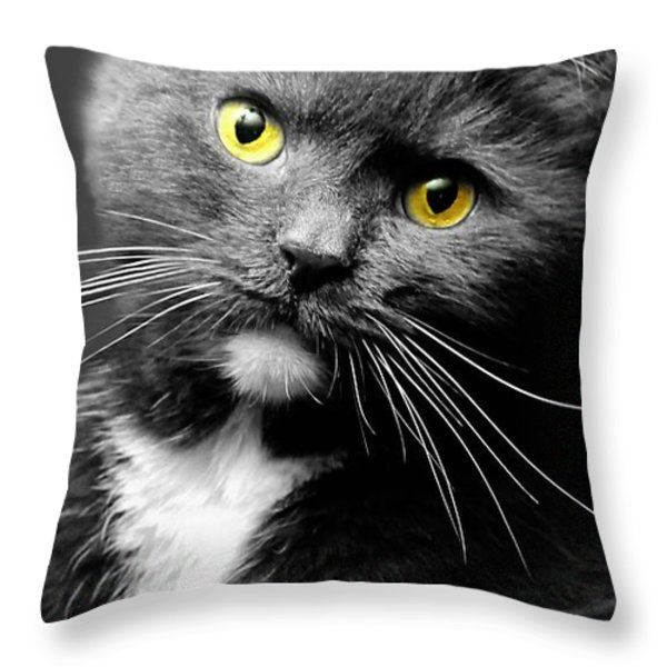 Domestic Gray And White Short Hair Throw Pillow by Diana Angstadt