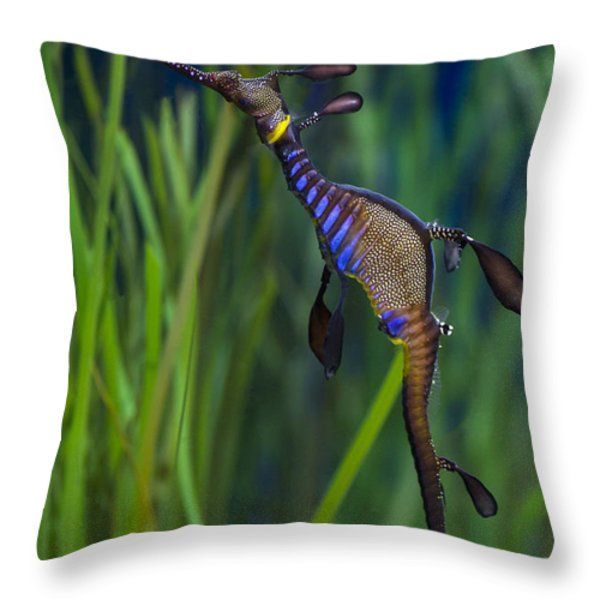 Dragon Seahorse Throw Pillow by Agrofilms Photography
