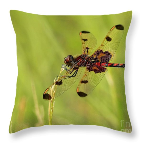 Enchantment Throw Pillow by Inspired Nature Photography By Shelley Myke