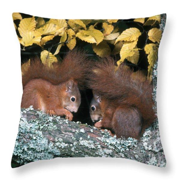 European Red Squirrels Throw Pillow by Hans Reinhard