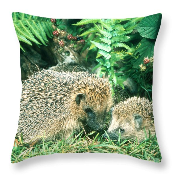 Hedgehog With Young Throw Pillow by Hans Reinhard