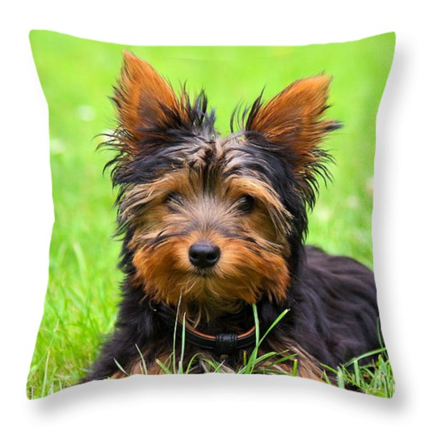 Hello Toby Throw Pillow by Angela Doelling AD DESIGN Photo and PhotoArt