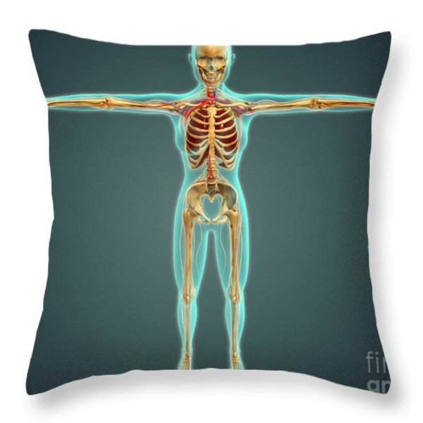 Human Body Showing Skeletal System Throw Pillow by Stocktrek Images