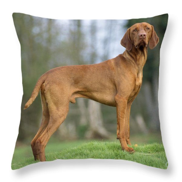 Hungarian Vizsla Dog Throw Pillow by John Daniels