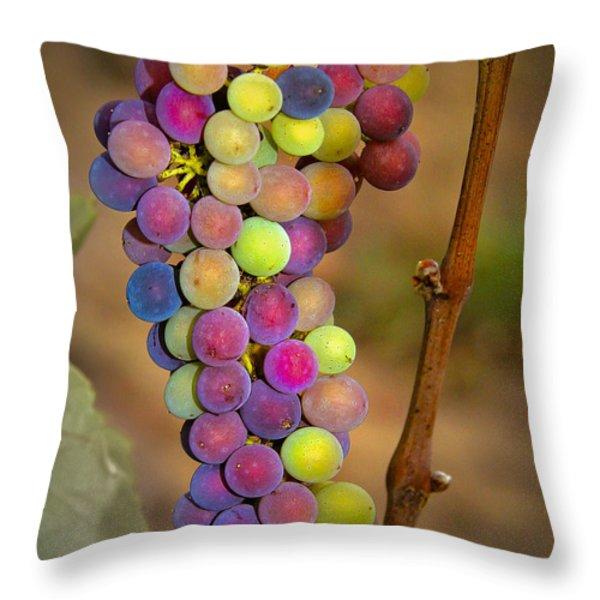 Jewel Tones Throw Pillow by Jean Noren