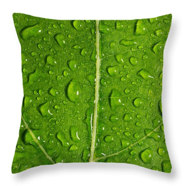 Leaf Dew Drop Number 12 Throw Pillow by Steve Gadomski