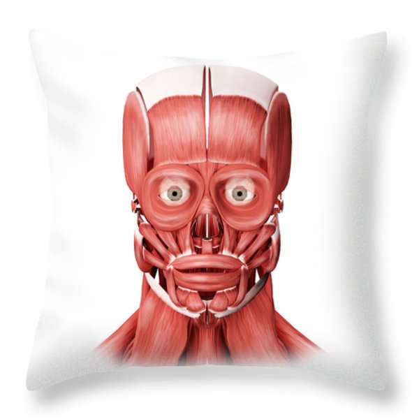 Medical Illustration Of Male Facial Throw Pillow by Stocktrek Images
