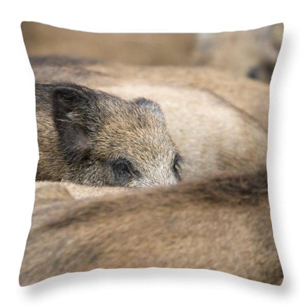 Piglets In Hochwildpark Rhineland Kommern Mechernich Germany Throw Pillow by Ronald Jansen