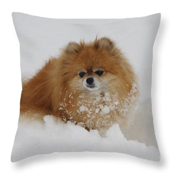 Pomeranian In Snow Throw Pillow by John Shaw