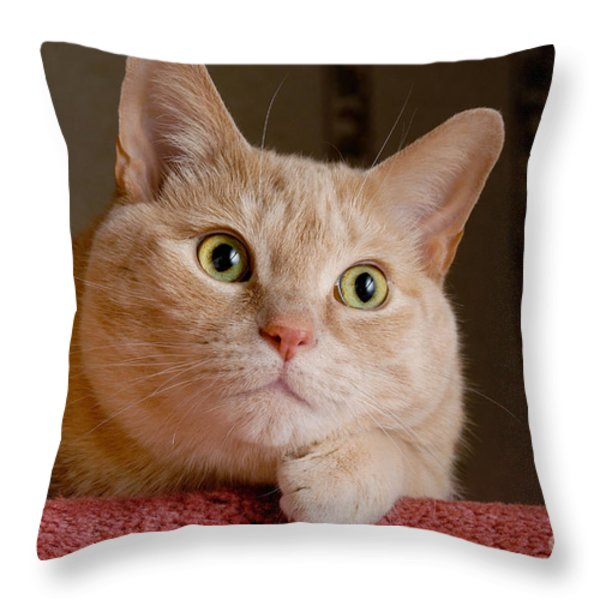 Portrait Orange Tabby Cat Throw Pillow by Amy Cicconi