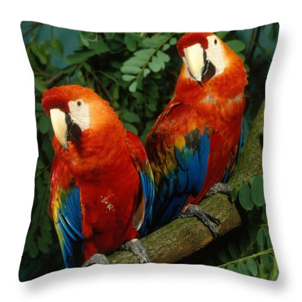 Scarlet Macaw Throw Pillow by Hans Reinhard