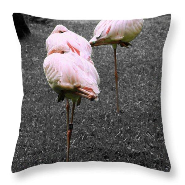 Sleeping Flamingos Throw Pillow by Cheryl Young