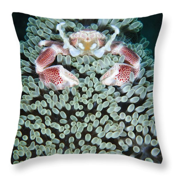 Spotted Porcelain Crab In Anemone Throw Pillow by Steve Jones