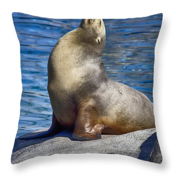 Sun Soaker Throw Pillow by Douglas Barnard