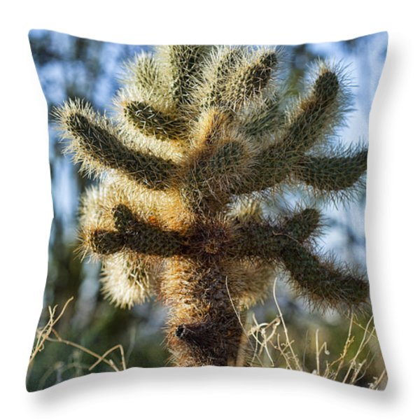 Teddy Bear Cholla Throw Pillow by Kelley King