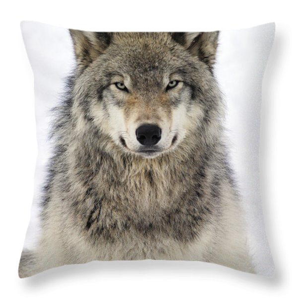 Timber Wolf Portrait Throw Pillow by Tony Beck