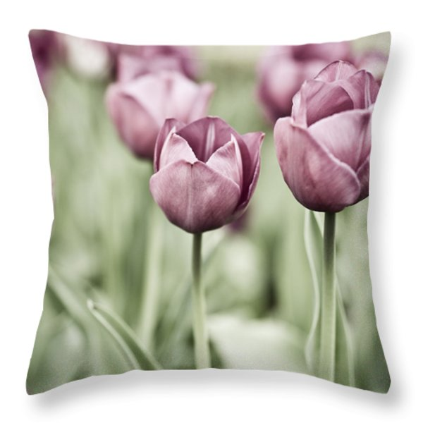Tulip Garden Throw Pillow by Frank Tschakert