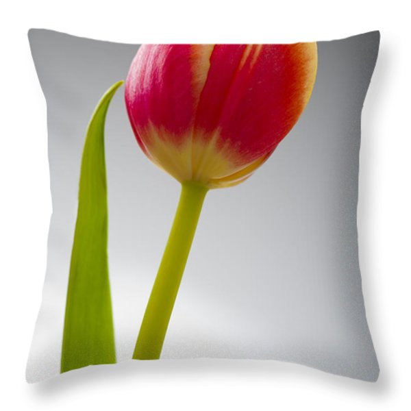 Tulip Throw Pillow by Sebastian Musial
